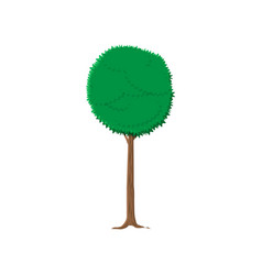 ash tree isolated on white vector image