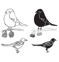 Bullfinch and magpie birds vector