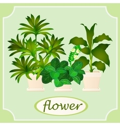 Green flowers in pots Image with space for text vector image vector image