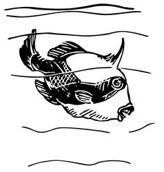 grey triggerfish vector image