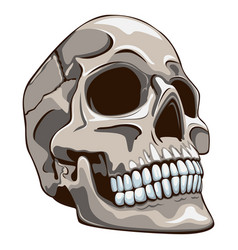 old skull vector image