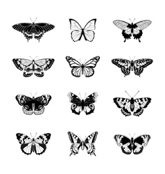 Set of realistc butterfly vector image vector image