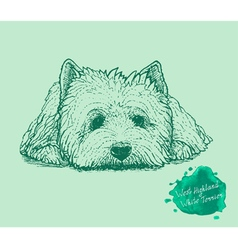Dog on a green background vector