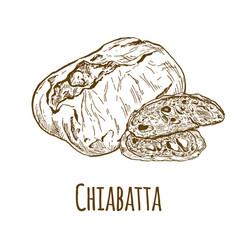 Chiabatta hand drawn vector