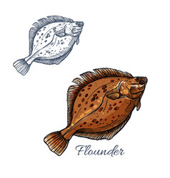 flounder flatfish sketch for seafood design vector image