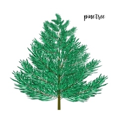 Pine tree isolated on wite vector image vector image