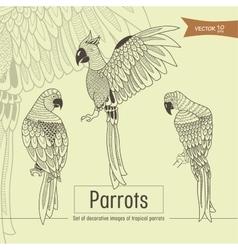 tropical parrots vector image