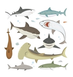 Shark different pose set vector