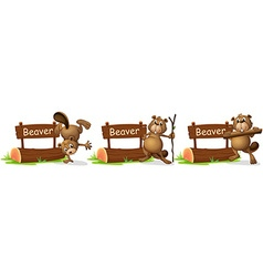 Beaver standing next to the sign vector image