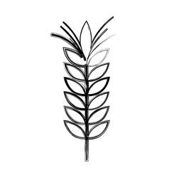 Figure healthy wheat organ plant nutricious vector