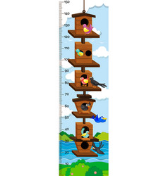 Growth mearsuring chart with birds in birdhouse vector