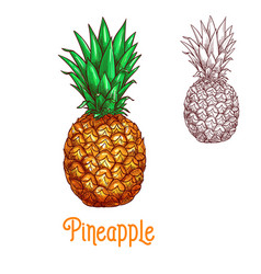Pineapple ananas fruit sketch isolated icon vector
