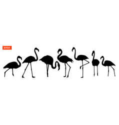 set of silhouettes of flamingo birds vector image
