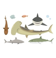 Shark character vector