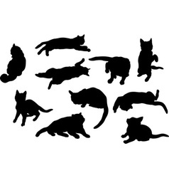 cats vector image vector image