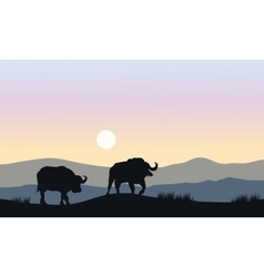 Silhouette of bull in hills vector