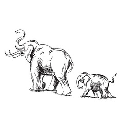 Sketch of an elephant with cub vector
