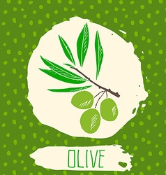 Olive hand drawn sketched fruit with leaf on vector