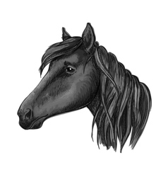 Black riding horse sketch for equestrian design vector