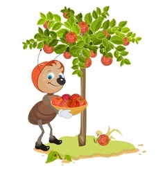 Ant Gardener gather apples Apple tree and red vector image vector image