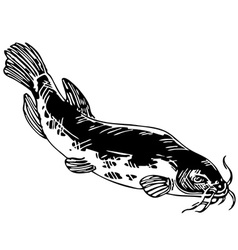 electric catfish vector image vector image