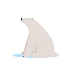 white polar bear animal arctic fauna species vector image