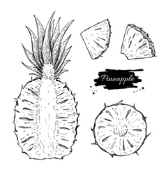 hand drawn pineapple and sliced pieces set vector image