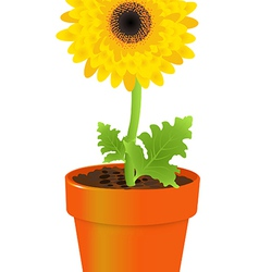 Daisy in pot vector