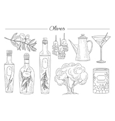 Olive oil and branch handdrawn set vector