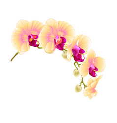 Beautiful isolated orchid yellow stem vector