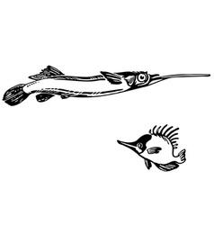 dermogenys pusillus naso unicornis vector image
