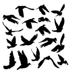 Doves and pigeons set for peace concept and vector