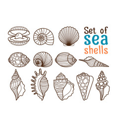Sea shell line icons vector