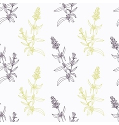 Hand drawn hyssop branch wirh flowers stylized vector