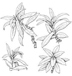 Doodle tradescantia vector