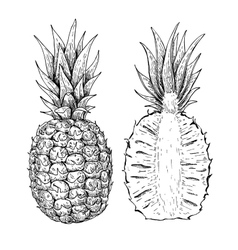 Hand drawn pineapple and sliced pieces set vector