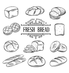 hand drawn decorative bread vector image