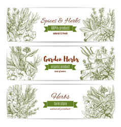 spices and herbs sketch banners vector image vector image