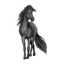 Walking black horse sketch portrait vector image vector image