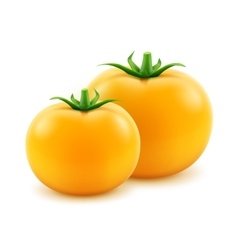 Big ripe yellow fresh whole tomatoes close up vector