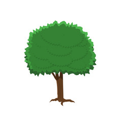 chestnut tree in flat style isolated on white vector image