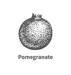 hand-drawn pomegranate vector image vector image