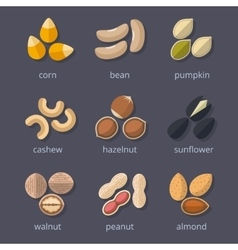 Nuts and seeds icon set vector image