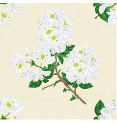Seamless texture twig white rhododendron vector