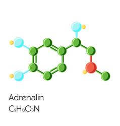 adrenalin adrenaline epinephrine hormone vector image vector image