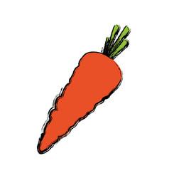 fresh carrot vegetable vector image