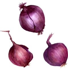 Watercolor purple onions vector
