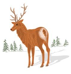 Young-deer vector image vector image