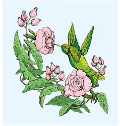 Colibri and flowers vector image