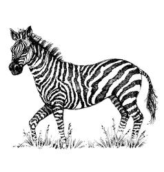 A cute zebra vector